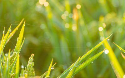 Agricultura ecológica, para un futuro más sostenible