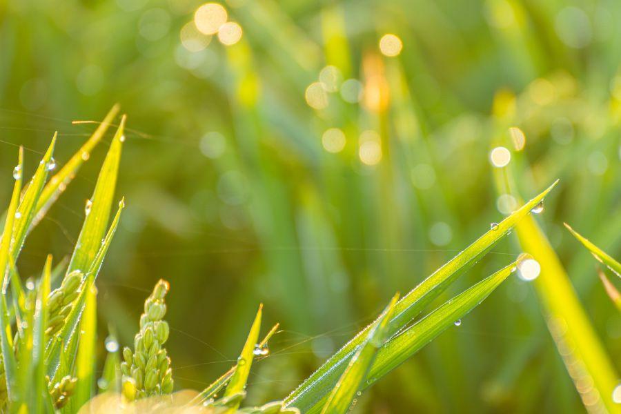 Agricultura ecológica, para un futuro más sostenible | Nomen Earth